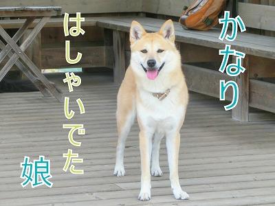 s-dogrun1140609-CIMG9698