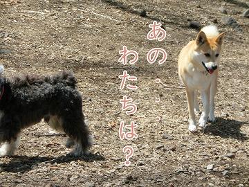 s-2dogrun140610-CIMG9711