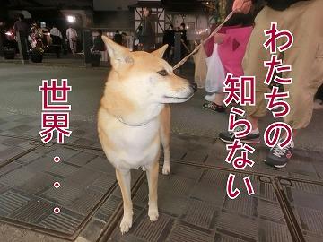 s-yubatake140701-CIMG9905