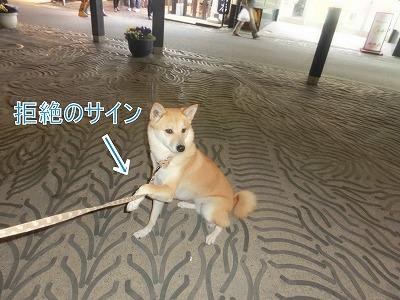 s-yubatake140701-CIMG9868