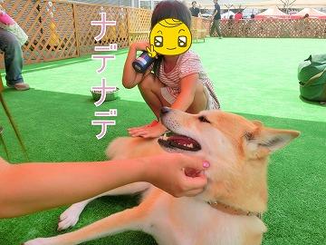 s-dog140811-1-CIMG2204