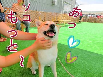 s-dog140811-1-CIMG2208