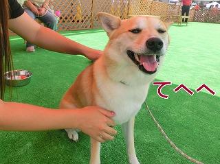 s-dog140811-CIMG2207