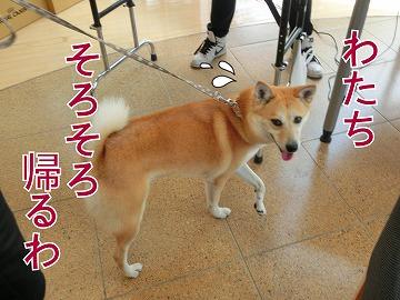 s-dog140812-1-CIMG2241