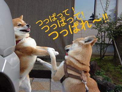a-dogつっぱり