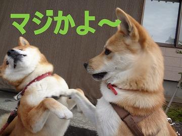 a-dogまじ