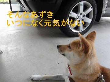 a-dog元気ない