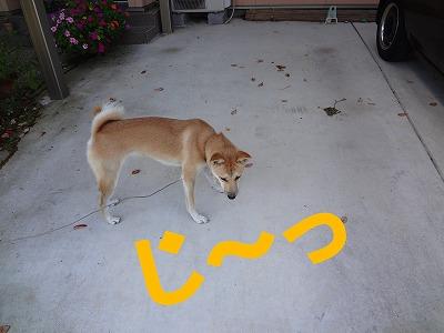 a-dogじっ