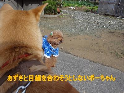 a-dog視線