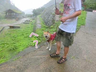 s-dog140819-CIMG2747