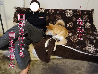 s-dogxDSC01904