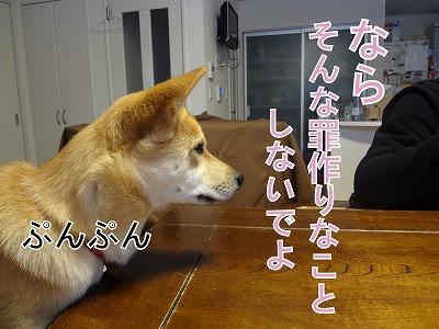 s-dogkDSC01931