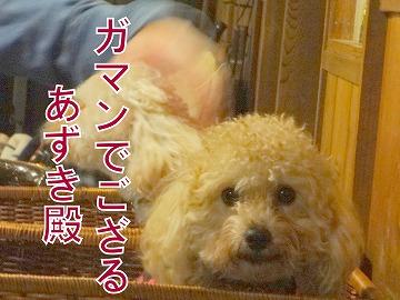 s-dogDSC05955