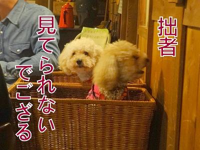 s-dog