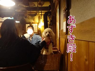 s-dogDSC05927