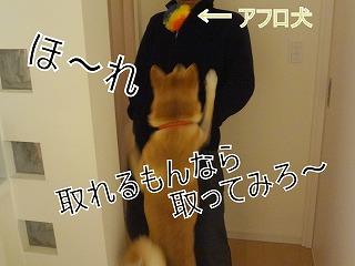 s-dogDSC02570