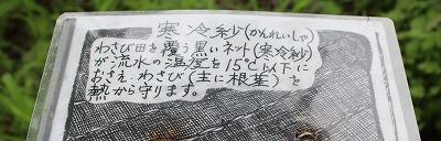 s-wasabi140907-003