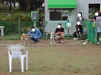 a-dogDSC00030.jpg