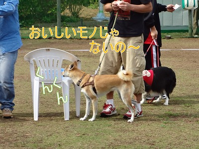 a-dogDSC00032.jpg