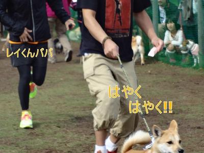a-dogDSC00034_sh01.jpg