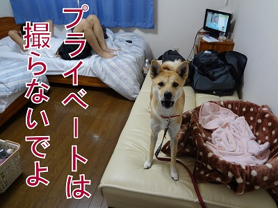 a-dogDSC00320.jpg