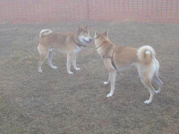 a-dogDSC00360.jpg