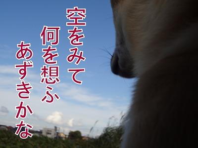 a-dogDSC00426.jpg