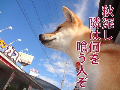 a-dogDSC00439.jpg