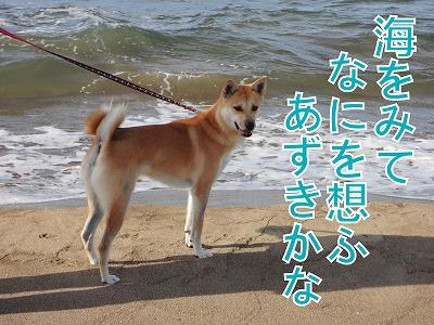 a-dogDSC00493.jpg