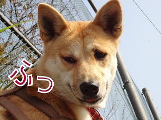 a-dogDSC00551.jpg