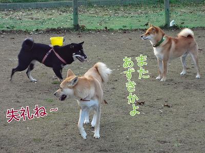 a-dogDSC00610.jpg