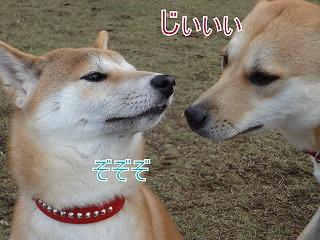 a-dogDSC00616.jpg