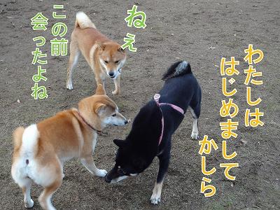 a-dogDSC00619.jpg