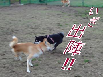 a-dogDSC00623.jpg