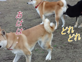 a-dogDSC00628.jpg