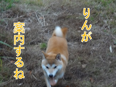 a-dogDSC00698.jpg