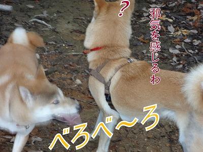a-dogDSC00703.jpg