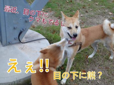 a-dogDSC00704.jpg