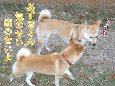 a-dogDSC00706.jpg