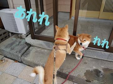 a-dogDSC00782-1.jpg