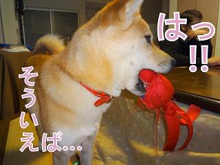 a-dogDSC01155.jpg