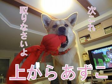 a-dogDSC01156.jpg