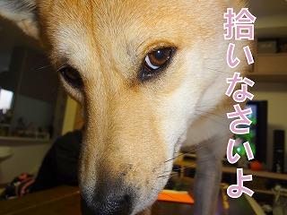 a-dogDSC01161.jpg