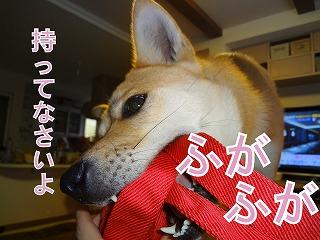 a-dogDSC01163.jpg