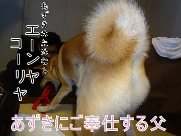 a-dogDSC01176.jpg