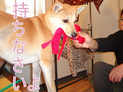 a-dogDSC01181.jpg