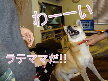 a-dogDSC01199.jpg