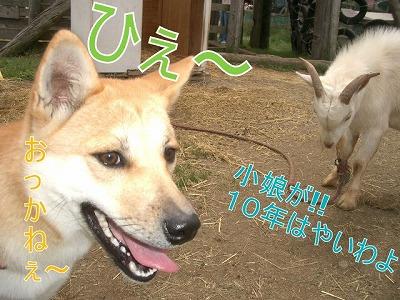 a-dogIMGP2766.jpg