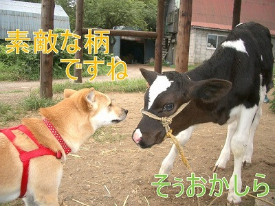 a-dogIMGP2775.jpg