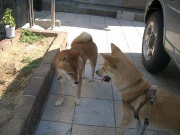 a-dogIMGP3166.jpg